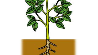 腸内環境を「植物の根っこ」に例えると・・・